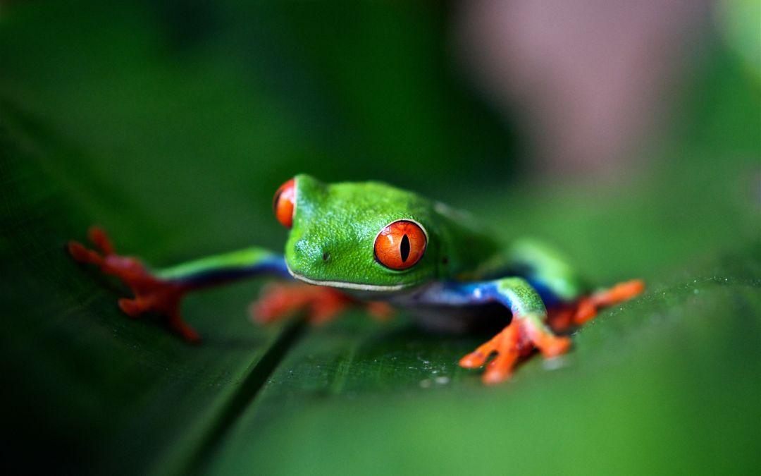 Volandino improvises on the Key of Frog Major at the Piano
